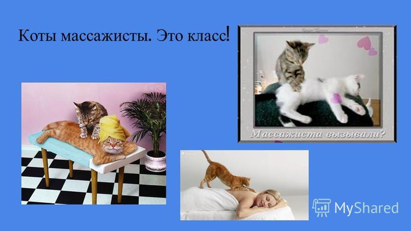 Коты массажисты. Это класс !