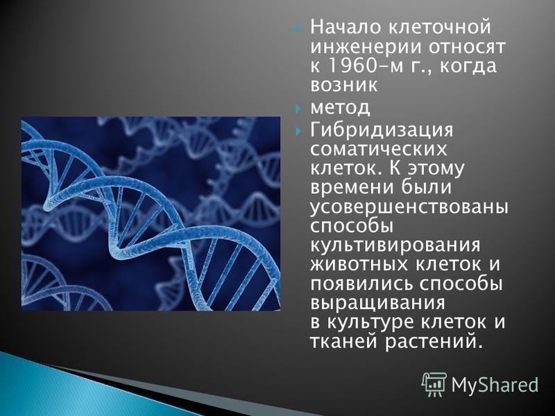 Начало клеточной инженерии относят к 1960-м г., когда возник метод Гибридизация соматических клеток. К этому времени были усовершенствованы способы культивирования животных клеток и появились способы выращивания в культуре клеток и тканей растений.