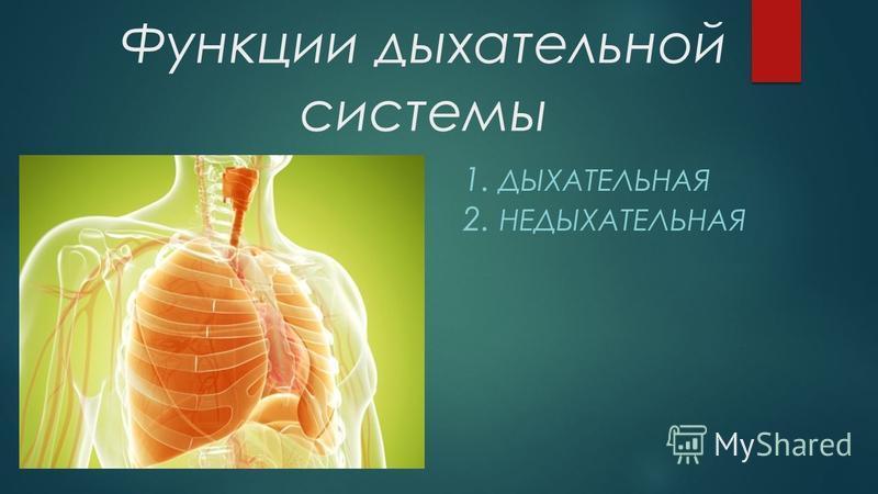 Функции дыхательной системы 1. ДЫХАТЕЛЬНАЯ 2. НЕДЫХАТЕЛЬНАЯ