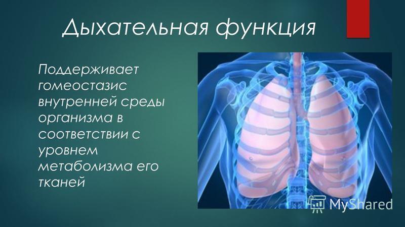 Дыхательная функция Поддерживает гомеостазис внутренней среды организма в соответствии с уровнем метаболизма его тканей