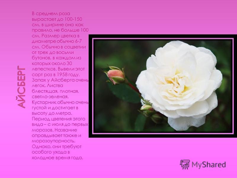 В среднем роза вырастает до 100-150 см, в ширине она как правило, не больше 100 см. Размер цветка в диаметре обычно 6-7 см. Обычно в соцветии от трех до восьми бутонов, в каждом из которых около 30 лепестков. Вывели этот сорт роз в 1958 году. Запах у