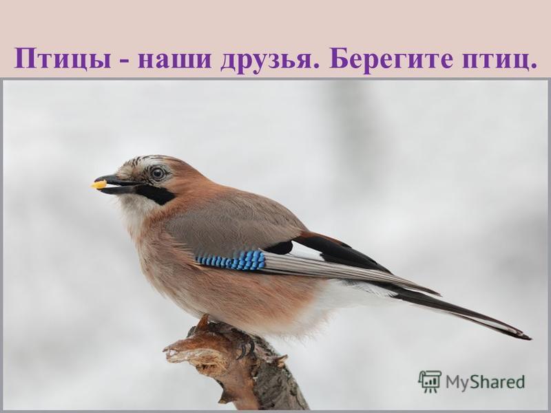 Птицы - наши друзья. Берегите птиц.