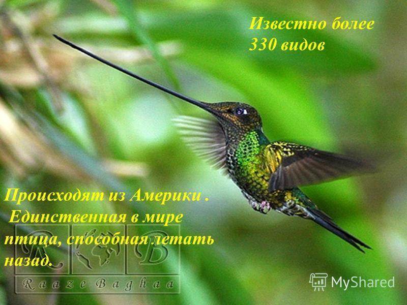 Презентация на тему: «Колибри» Выполнила ученица 1 «Б» класса Лунева Элина