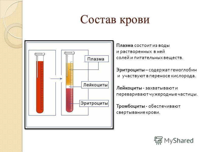 Состав крови Плазма состоит из воды и растворенных в ней солей и питательных веществ. Эритроциты – содержат гемоглобин и участвуют в переносе кислорода. Лейкоциты - захватывают и переваривают чужеродные частицы. Тромбоциты - обеспечивают свертывание