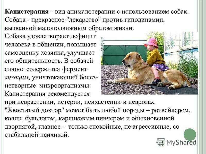 Канистерапия - вид анималотерапии с использованием собак. Собака - прекрасное
