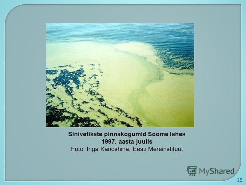 18 Sinivetikate pinnakogumid Soome lahes 1997. aasta juulis Foto: Inga Kanoshina, Eesti Mereinstituut