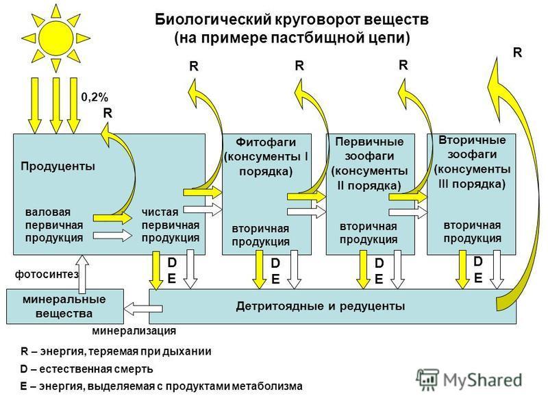Продуценты Первичные зоофаги (консументы II порядка) Фитофаги (консументы I порядка) Вторичные зоофаги (консументы III порядка) вторичная продукция валовая первичная продукция чистая первичная продукция Детритоядные и редуценты минеральные вещества R