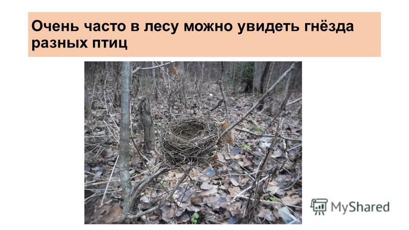 Очень часто в лесу можно увидеть гнёзда разных птиц
