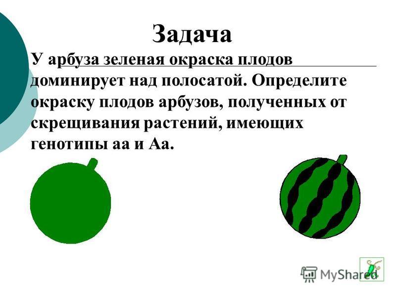 У арбуза зеленая окраска плодов доминирует над полосатой. Определите окраску плодов арбузов, полученных от скрещивания растений, имеющих генотипы а и Аа. Аа Задача
