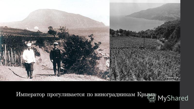 Император прогуливается по виноградникам Крыма