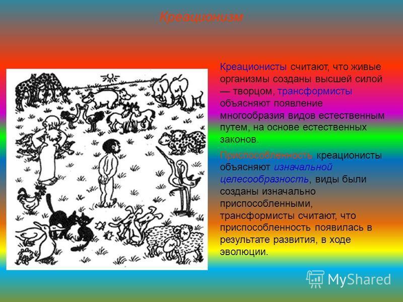 Креационизм Креационисты считают, что живые организмы созданы высшей силой творцом, трансформисты объясняют появление многообразия видов естественным путем, на основе естественных законов. Приспособленность креационисты объясняют изначальной целесооб