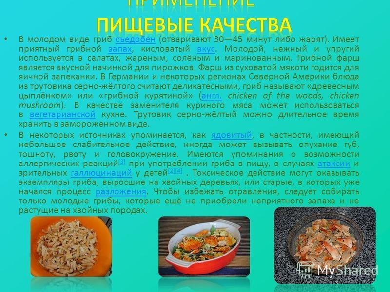В молодом виде гриб съедобен (отваривают 3045 минут либо жарят). Имеет приятный грибной запах, кисловатый вкус. Молодой, нежный и упругий используется в салатах, жареным, солёным и маринованным. Грибной фарш является вкусной начинкой для пирожков. Фа