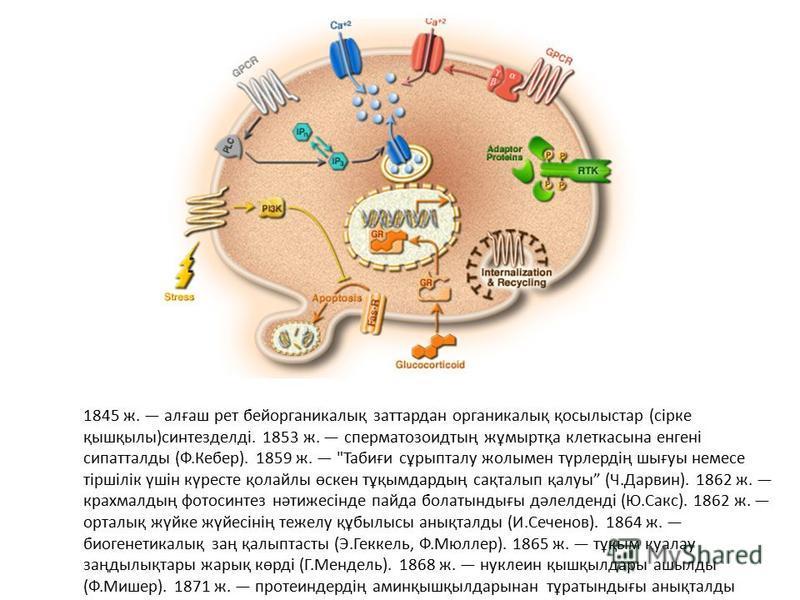 1845 ж. алғаш рет бейорганикалық заттардан органикалық қосылыстар (сірке қышқылы)синтезделді. 1853 ж. сперматозоидтың жұмыртқа клеткасына енгені сипатталды (Ф.Кебер). 1859 ж.
