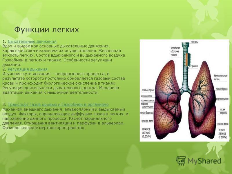 Функции легких 1. Дыхательные движения Вдох и выдох как основные дыхательные движения, характеристика механизма их осуществления. Жизненная емкость легких. Состав вдыхаемого и выдыхаемого воздуха. Газообмен в легких и тканях. Особенности регуляции ды