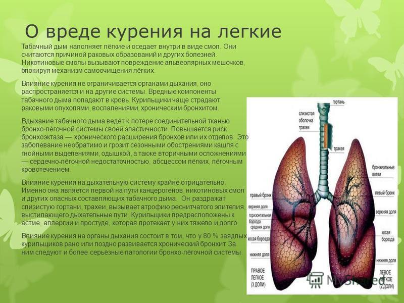 О вреде курения на легкие Табачный дым наполняет лёгкие и оседает внутри в виде смол. Они считаются причиной раковых образований и других болезней. Никотиновые смолы вызывают повреждение альвеолярных мешочков, блокируя механизм самоочищения лёгких. В