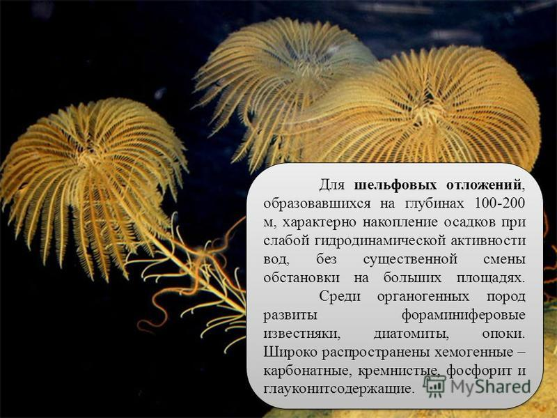 46 Для шельфовых отложений, образовавшихся на глубинах 100-200 м, характерно накопление осадков при слабой гидродинамической активности вод, без существенной смены обстановки на больших площадях. Среди органогенных пород развиты фораминиферовые извес