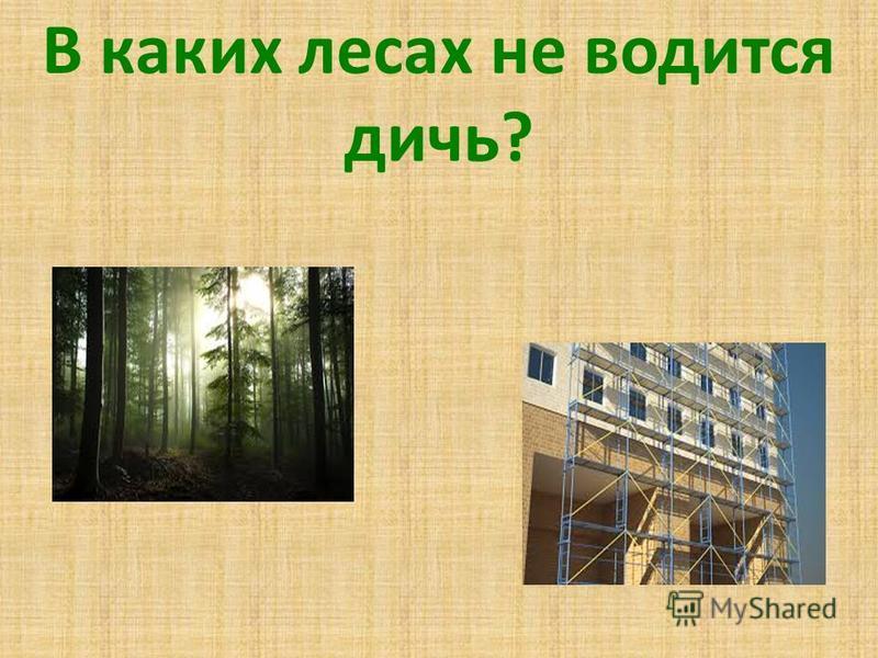 В каких лесах не водится дичь?