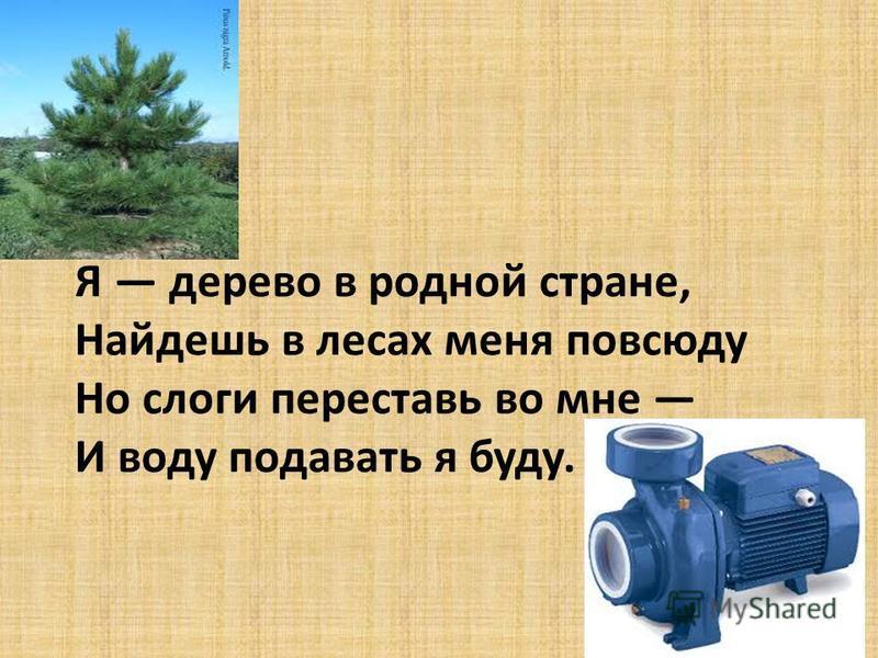 Я дерево в родной стране, Найдешь в лесах меня повсюду Но слоги переставь во мне И воду подавать я буду.