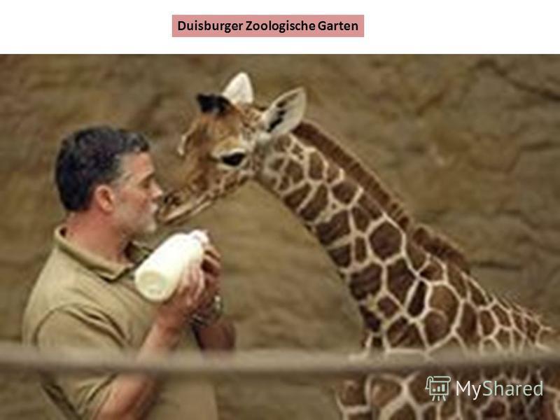 Duisburger Zoologische Garten