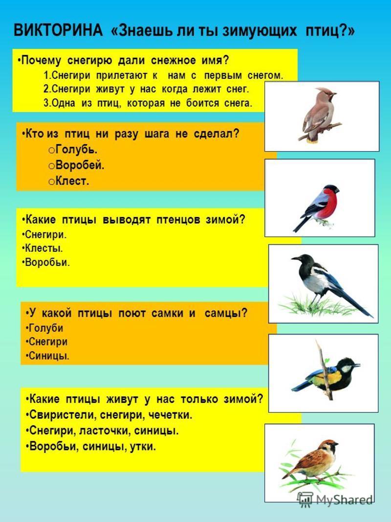 презентация-викторина птицы