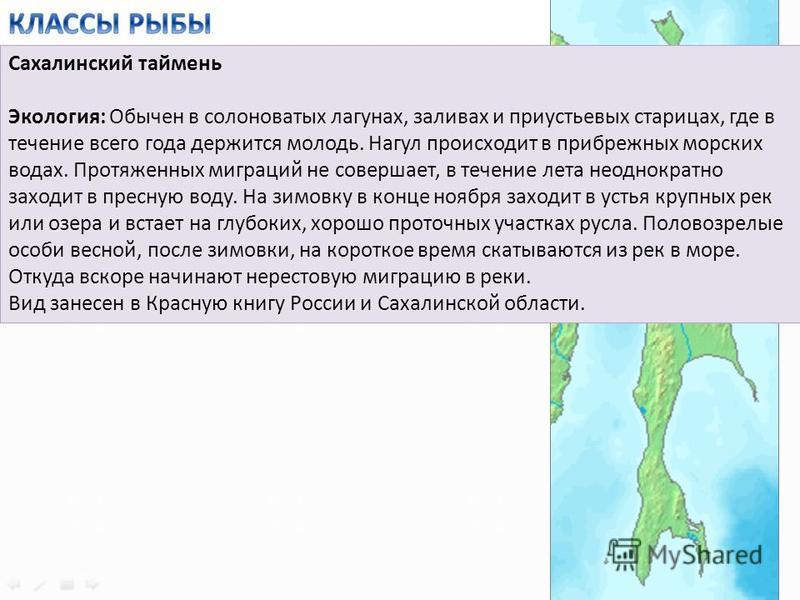 Сахалинский таймень Экология: Обычен в солоноватых лагунах, заливах и приустьевых старицах, где в течение всего года держится молодь. Нагул происходит в прибрежных морских водах. Протяженных миграций не совершает, в течение лета неоднократно заходит
