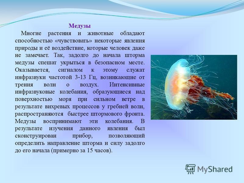 Медузы Многие растения и животные обладают способностью «чувствовать» некоторые явления природы и её воздействие, которые человек даже не замечает. Так, задолго до начала шторма медузы спешат укрыться в безопасном месте. Оказывается, сигналом к этому