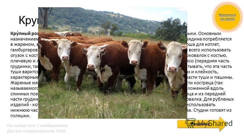 Крупьяный Рогатый Скот Кру́пьяный рога́тый скот (КРС) сельскохозяйственные животные подсемейства Быки. Основным назначением КРС является производство мяса и молока, а также тяговая сила. Говядина потребляется в жареном, вареном, тушеном, копченом вид
