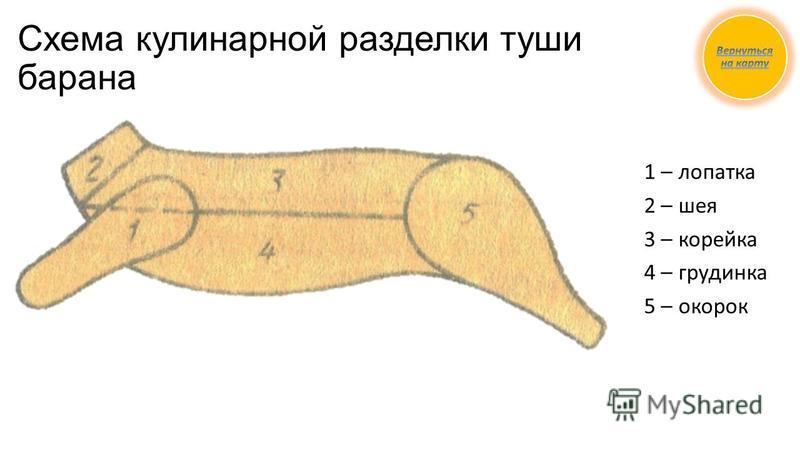 Схема кулинарной разделки туши барана 1 – лопатка 2 – шея 3 – корейка 4 – грудинка 5 – окорок