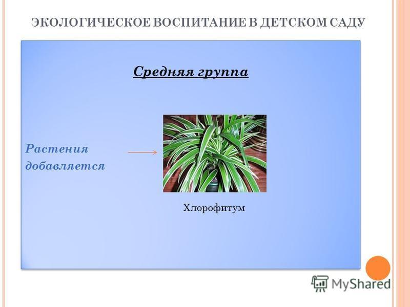 ЭКОЛОГИЧЕСКОЕ ВОСПИТАНИЕ В ДЕТСКОМ САДУ Средняя группа Растения добавляется Средняя группа Растения добавляется Хлорофитум