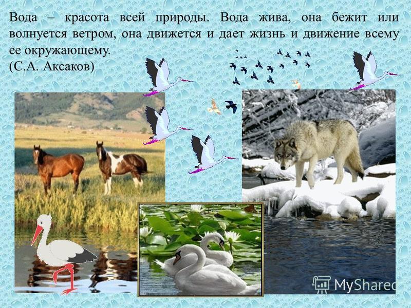 Вода – красота всей природы. Вода жива, она бежит или волнуется ветром, она движется и дает жизнь и движение всему ее окружающему. (С.А. Аксаков)