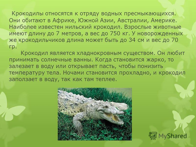 Крокодилы относятся к отряду водных пресмыкающихся. Они обитают в Африке, Южной Азии, Австралии, Америке. Наиболее известен нильский крокодил. Взрослые животные имеют длину до 7 метров, а вес до 750 кг. У новорожденных же крокодильчиков длина может б