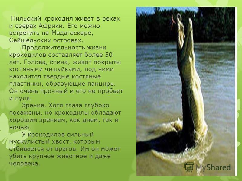 Нильский крокодил живет в реках и озерах Африки. Его можно встретить на Мадагаскаре, Сейшельских островах. Продолжительность жизни крокодилов составляет более 50 лет. Голова, спина, живот покрыты костяными чешуйками, под ними находится твердые костян