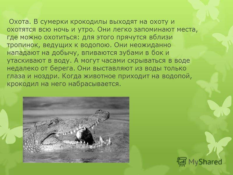 Охота. В сумерки крокодилы выходят на охоту и охотятся всю ночь и утро. Они легко запоминают места, где можно охотиться: для этого прячутся вблизи тропинок, ведущих к водопою. Они неожиданно нападают на добычу, впиваются зубами в бок и утаскивают в в