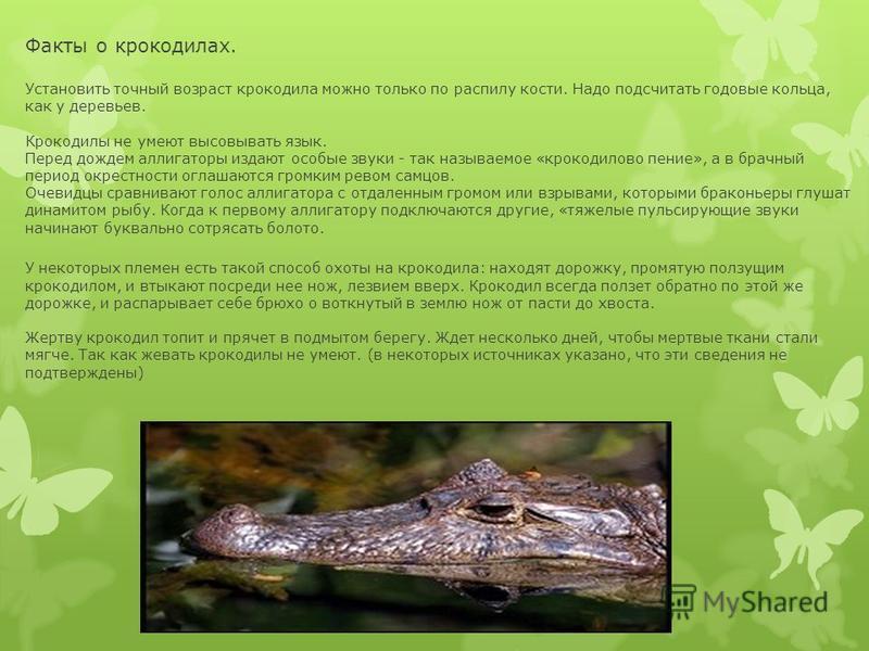 Факты о крокодилах. Установить точный возраст крокодила можно только по распилу кости. Надо подсчитать годовые кольца, как у деревьев. Крокодилы не умеют высовывать язык. Перед дождем аллигаторы издают особые звуки - так называемое «крокодилово пение