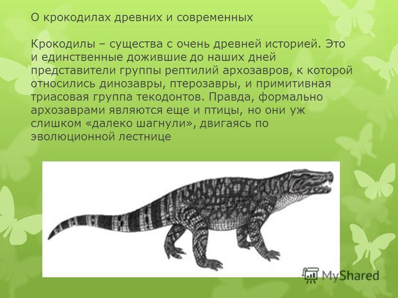 О крокодилах древних и современных Крокодилы – существа с очень древней историей. Это и единственные дожившие до наших дней представители группы рептилий архозавров, к которой относились динозавры, птерозавры, и примитивная триасовая группа текодонто