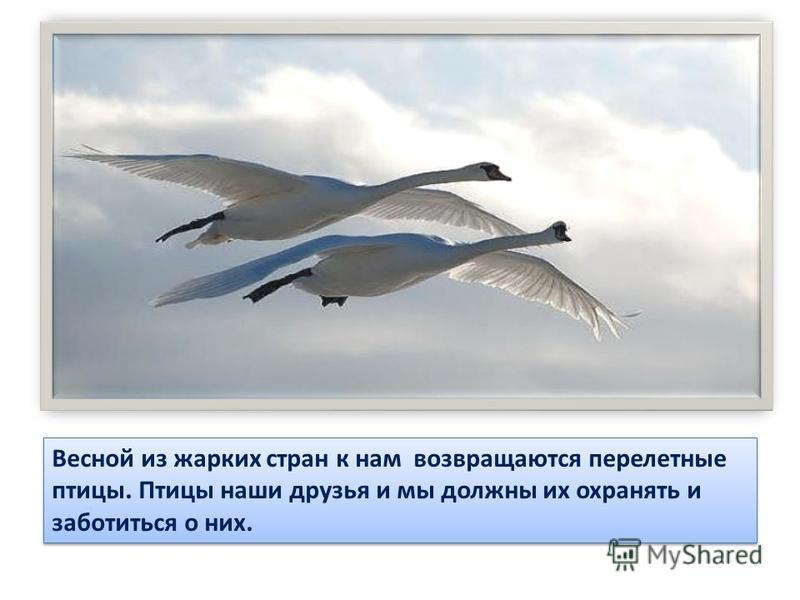 Весной из жарких стран к нам возвращаются перелетные птицы. Птицы наши друзья и мы должны их охранять и заботиться о них.
