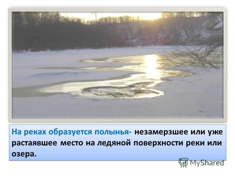 На реках образуется полынья- незамерзшее или уже растаявшее место на ледяной поверхности реки или озера.