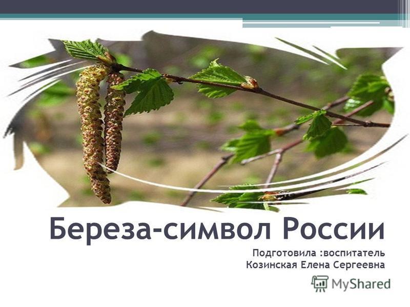 Береза-символ России Подготовила :воспитатель Козинская Елена Сергеевна