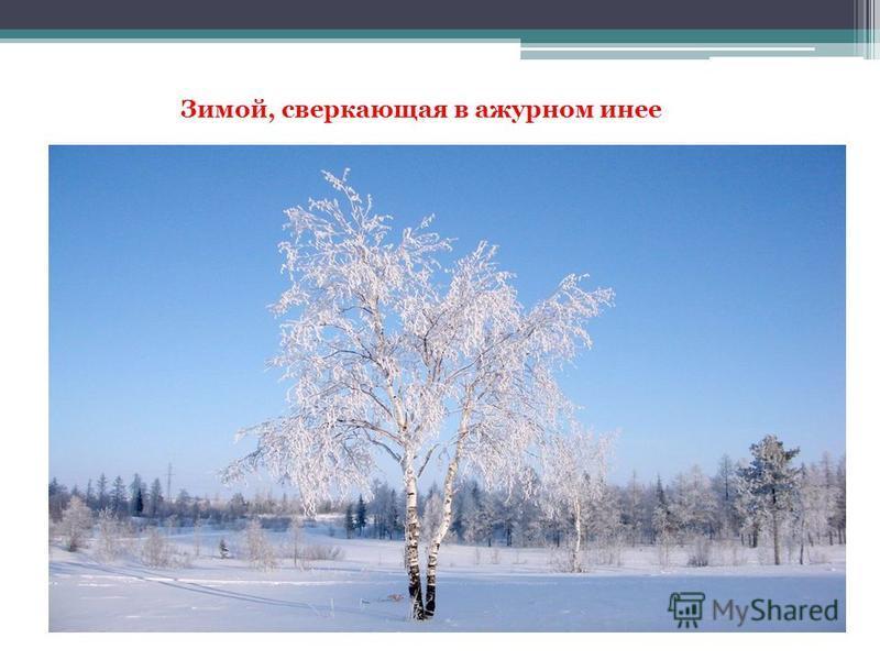 Зимой, сверкающая в ажурном инее