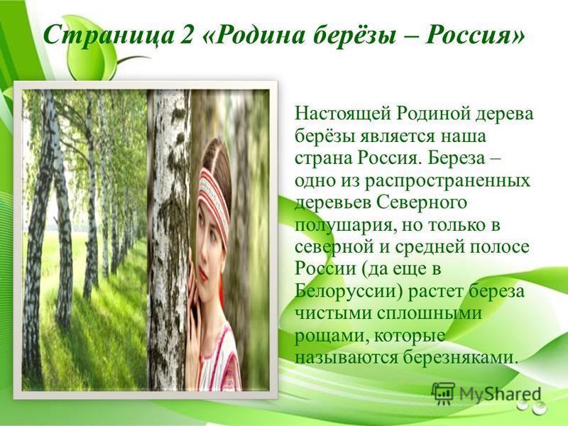 Страница 2 «Родина берёзы – Россия» Настоящей Родиной дерева берёзы является наша страна Россия. Береза – одно из распространенных деревьев Северного полушария, но только в северной и средней полосе России (да еще в Белоруссии) растет береза чистыми