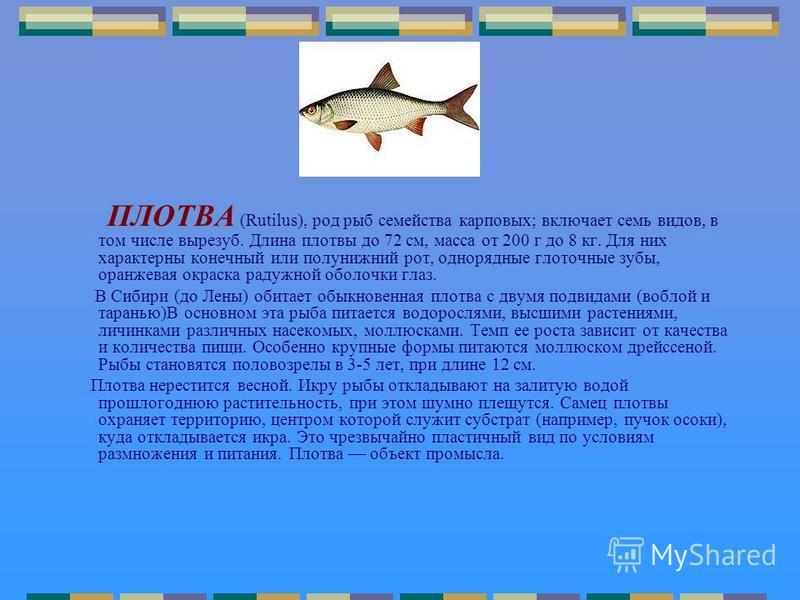 ПЛОТВА (Rutilus), род рыб семейства карповых; включает семь видов, в том числе вырезуб. Длина плотвы до 72 см, масса от 200 г до 8 кг. Для них характерны конечный или полунижний рот, однорядные глоточные зубы, оранжевая окраска радужной оболочки глаз