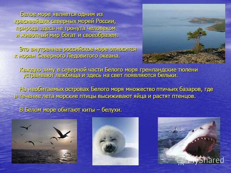 Одни исследователи названия высказывают предположение о том, что море названо Белым потому, что оно покрыто льдом большую часть года. Другие полагают, что название происходит от беловатого цвета воды, отражающей северное небо. И действительно, в любо