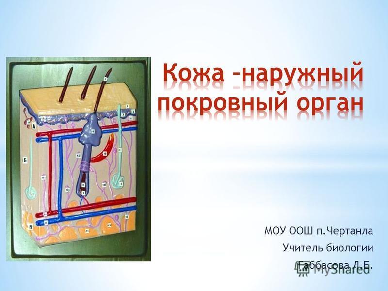 МОУ ООШ п.Чертанла Учитель биологии Габбасова Л.Е.