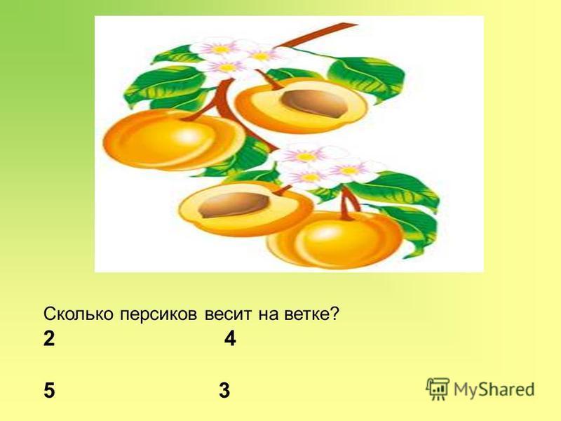 Сколько персиков весит на ветке? 2 4 5 3