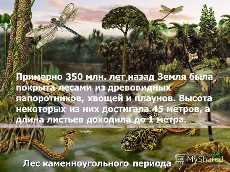 Лес каменноугольного периода Примерно 350 млн. лет назад Земля была покрыта лесами из древовидных папоротников, хвощей и плаунов. Высота некоторых из них достигала 45 метров, а длина листьев доходила до 1 метра.