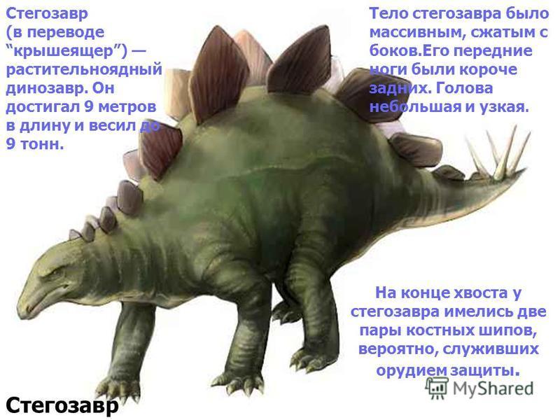 На конце хвоста у стегозавра имелись две пары костных шипов, вероятно, служивших орудием защиты. Стегозавр Стегозавр (в переводе крыше ящер) растительноядный динозавр. Он достигал 9 метров в длину и весил до 9 тонн. Тело стегозавра было массивным, сж