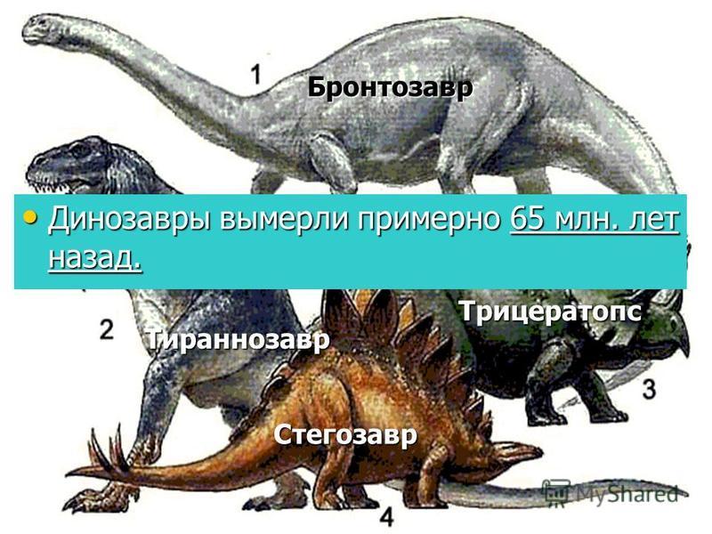 Стегозавр Трицератопс Тираннозавр Динозавры вымерли примерно 65 млн. лет назад. Динозавры вымерли примерно 65 млн. лет назад. Бронтозавр