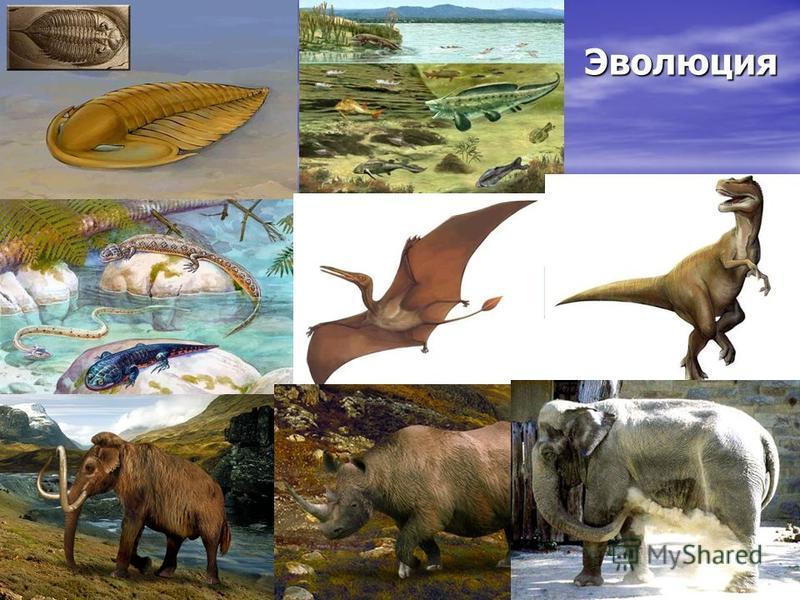 Эволюция Длительный процесс исторического развития живых организмов от простых до более сложных Длительный процесс исторического развития живых организмов от простых до более сложных Эволюция