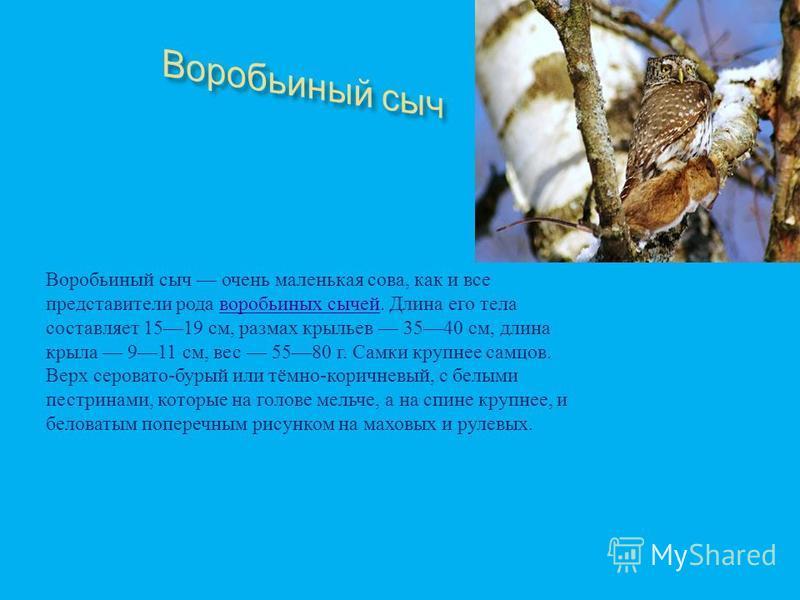 Малая крачка Малая крачка самая мелкая из крачек. крачек Вес птицы 45 г, длина 20 см. В брачном наряде имеет неполную чёрную шапочку. Лоб и подоски над бровями белые. Клюв жёлтый с чёрным кончиком, лапы желтоватые. Сверху окрас светдо - серый, снизу