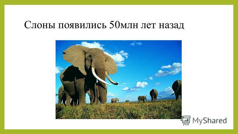 Слоны появились 50 млн лет назад